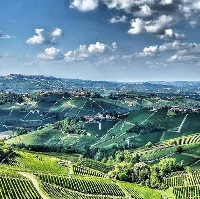 Bing Wines a Barolo